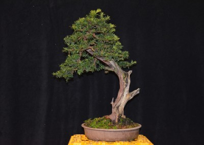 Yama-bonsai_Will_185