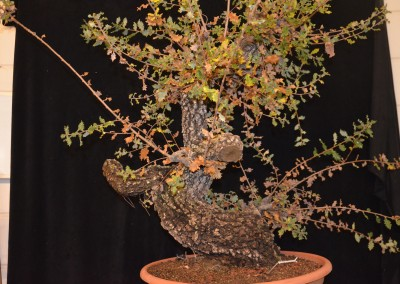 Yama-bonsai_Will_191