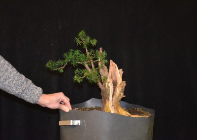 Yama-bonsai_Will_192