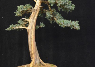 Yama-bonsai_Will_249