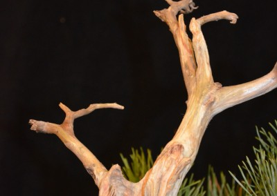 Yama-bonsai_Will_259