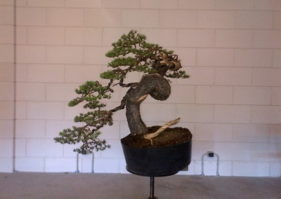 Yama-bonsai_Will_269